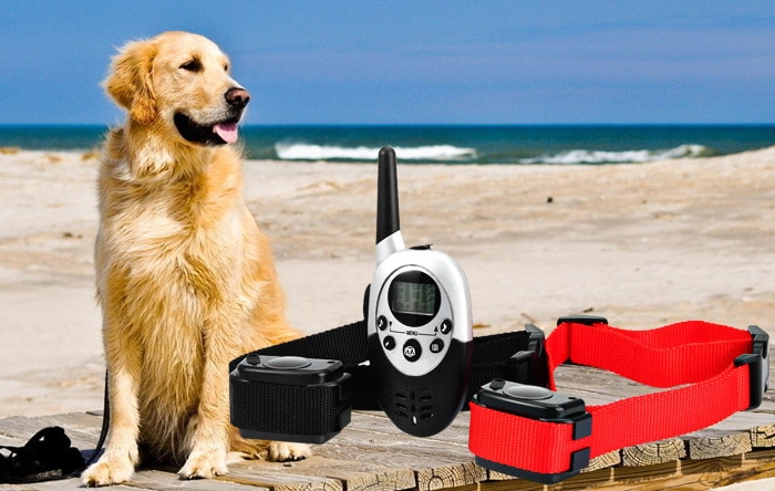 Remote Controlling Your Dogs